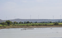 Birds and Wetland. Birds in the Wetland and Wind Turbines in the background over the mountain. Birds are Cormorants royalty free stock photos