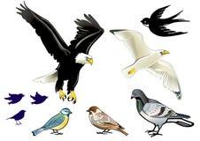 Birds on white Stock Photo