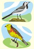 Birds white wagtail and yellowhammer Stock Photo