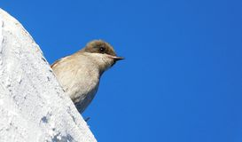 Birds on a whitewashed wall Royalty Free Stock Photos