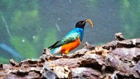 Birds who love to eat stock photo