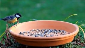 Birds, wild birds, fodder place, tit, mousetit stock video