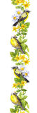 Birds in wild herbs, flowers. Watercolour. Repeating border frame Royalty Free Stock Image