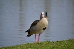 Birds. Wild birds seen by close Stock Images