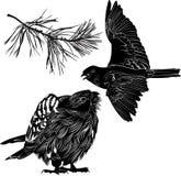 Birds. Wildlife and bird falcon bird  vector Royalty Free Stock Image