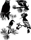 Birds of wildlife. Cuckoo, owl, Odud, finch royalty free illustration