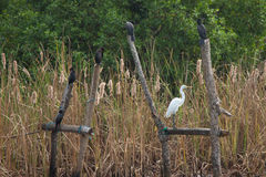 Birds and wildlife in Dutch Canals in Negombo, Sri Lanka Royalty Free Stock Images