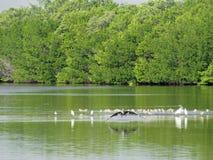 Birds of Wildlife Refuge Florida Stock Photo
