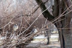 Birds in wildlife. View of beautiful bird which sits on a branch under sunlight landscape. Sunny, amazing, sparrow image royalty free stock image