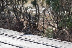 Birds in wildlife. View of beautiful bird which sits on a branch under sunlight landscape. Sunny, amazing, sparrow image stock photos