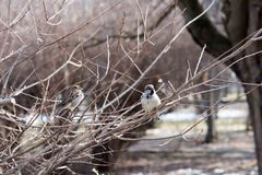 Birds in wildlife. View of beautiful bird which sits on a branch under sunlight landscape. Sunny, amazing, sparrow image stock images
