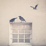 Birds and Window Royalty Free Stock Photo