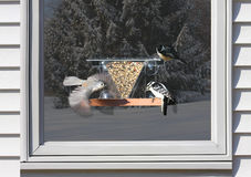 Birds on a Window Feeder Royalty Free Stock Photo