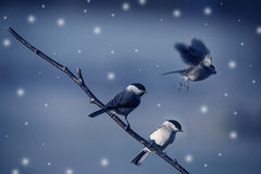 Birds in winter Stock Photo
