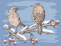 Birds in the winter day. Vector image of the birds on the tree branches in the snowy day Stock Image