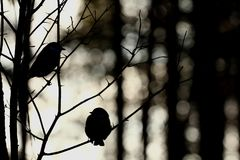 Birds in winter forest Royalty Free Stock Photo