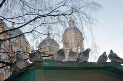 Birds in the winter near the church Stock Image