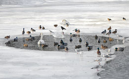 Birds in winter. Stock Photography