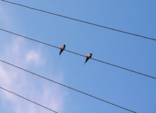 Birds on the wire. Birds sitting on a wire stock image