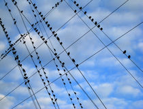 Birds on a Wire. A flock of birds form intersecting patterns while sitting on crossed power lines stock photo