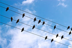 Birds On a Wire Royalty Free Stock Photos