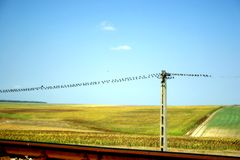 Birds on the wire. Power wire with birds and beautiful scenery Stock Photo