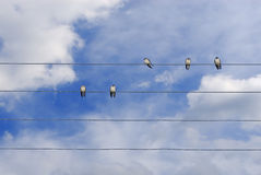 Birds on wire. Some birds standing on a telephone line wire stock photos