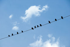 Birds on a wire. Against blue sky with clouds Stock Images