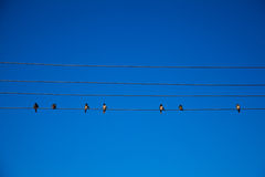 Birds on a Wire. Birds on Power Lines against a blue sky Stock Photography