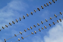 Birds on wire. Group of birds on electric wire over blue sky Stock Photography