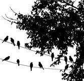 Birds on wire stock illustration