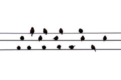 Birds on the wire Royalty Free Stock Photo