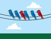 Birds Wire. Various birds sitting on wire Royalty Free Stock Images