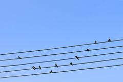 Birds on a wire. With blue sky background Royalty Free Stock Image