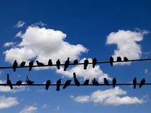 Birds on a wire. Silhouettes of birds sitting on wires Royalty Free Stock Photography