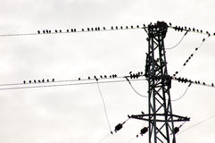 Birds on wire. Group of birds on electrical wire Royalty Free Stock Photos