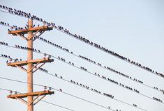 Birds on a wire Royalty Free Stock Images