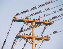 Birds on a wire Royalty Free Stock Image