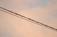Birds on wire. At sunset stock photos