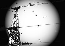 Birds on wire. Black and white Stock Photo