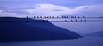 Birds on a Wire. Silhouetted against a blue mountain and lake landscape Stock Photo