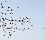 Birds on wire Stock Images