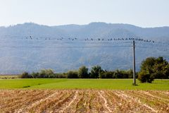 Birds on the wire. Birds sit on the electric power lines in some slovenian rural area stock photos