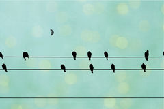 Birds on a wire. Black birds and crows on a telephone wire with an abstract teal green blurred background with bokeh royalty free stock photography