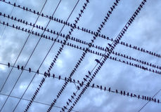 Birds on a Wire. Blackbirds line the wires against a cloudy sky Royalty Free Stock Photo