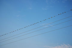 Birds on wire Blue sky Royalty Free Stock Images