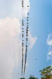 Birds on wire in Chitwan National Park Nepal Royalty Free Stock Image