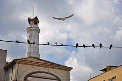 Birds on a wire Stock Photos