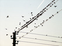 Birds of a wire and the flying plane. Birds, flight, The plane, collective, group, wires, columns, an electricity, the blue sky, flight, a trace, transport Royalty Free Stock Image