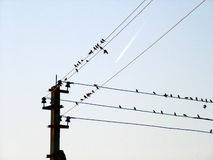 Birds of a wire and the flying plane. Birds, flight, The plane, collective, group, wires, columns, an electricity, the blue sky, flight, a trace, transport Stock Image